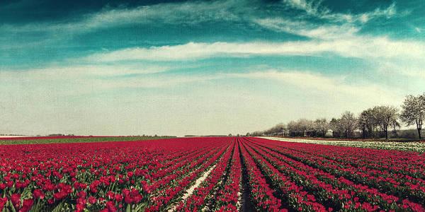 Photograph - Field Of Red Tulips Panorama by Dirk Wuestenhagen