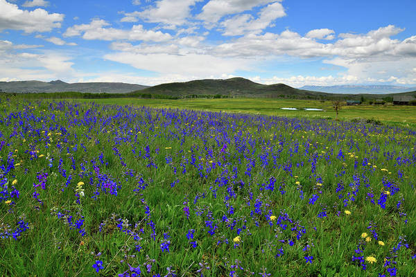 Photograph - Field Of Wildflowers Along Last Dollar Road by Ray Mathis