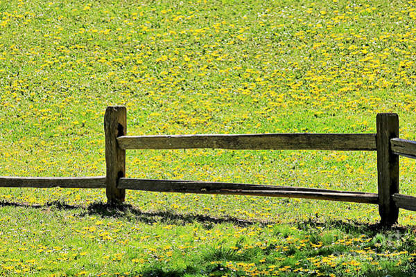 Wall Art - Photograph - Field Of Wildflowers by Diann Fisher