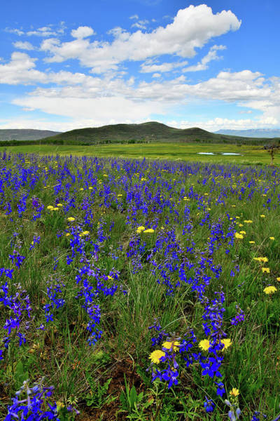 Photograph - Field Of Wildflowers In Colorado by Ray Mathis