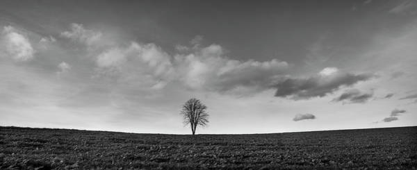 Baden Wuerttemberg Photograph - Field With A Bare Tree by Panoramic Images