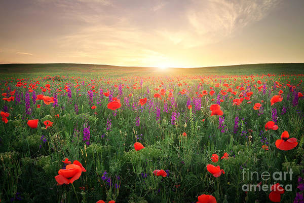 Field With Grass, Violet Flowers And Art Print
