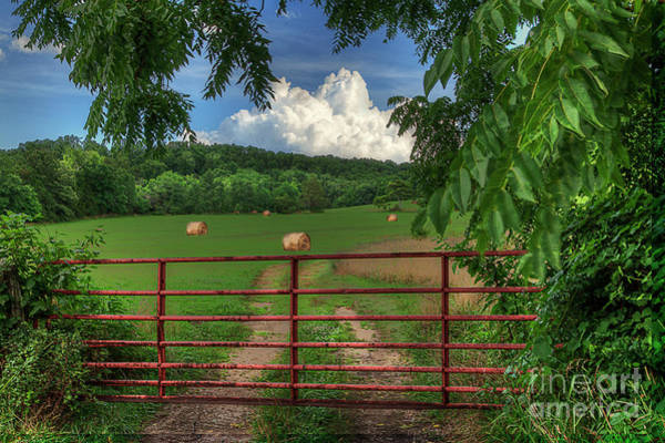 Wall Art - Photograph - Field With Hay Bales by Larry Braun
