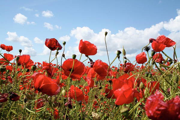 Made In Wall Art - Photograph - Field With Poppies by Made By W. Zwaal