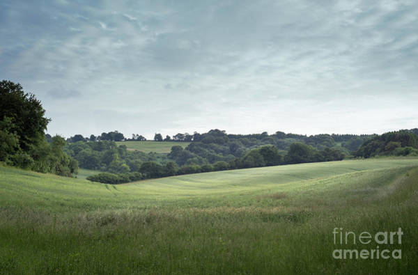 Photograph - Fields And Woods In Hampshire, England by Perry Rodriguez