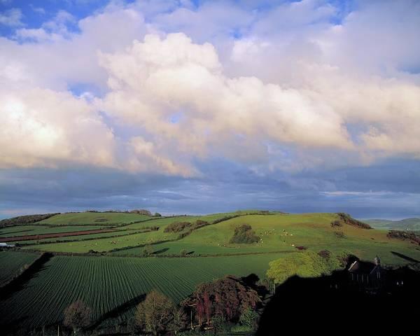 Design Photograph - Fields Around Dunamace, Co Laois by Design Pics
