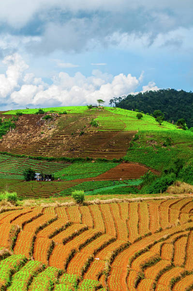 Chiang Mai Province Photograph - Fields In Steps Mon Jam Chiang Mai by Rokkor