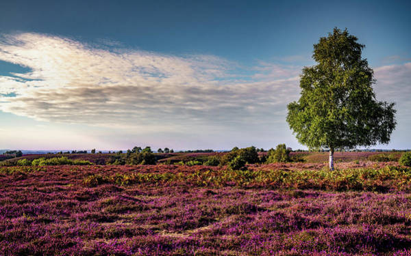 Photograph - Fields Of Heather by Framing Places