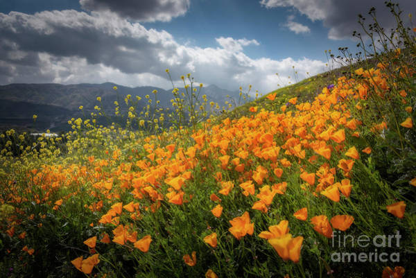 Photograph - Fields Of Joy by Peng Shi