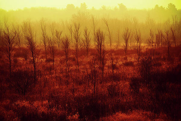 Photograph - Fiery Orange Autumn Colors by Tatiana Travelways