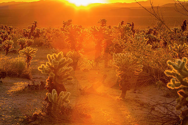 Photograph - Fiery Sunrise Among The Cacti by ProPeak Photography