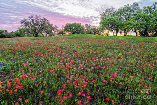 Photograph - Fiery Sunrise And Wildflowers At Windmill Hill - Old Baylor University Park - Independence Texas by Silvio Ligutti