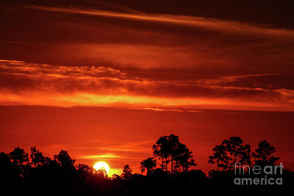 Photograph - Fiery Pine Glades Sunrise by Tom Claud