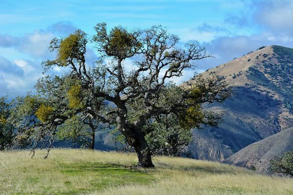 Photograph - Lone Tree Figueroa Mountain by Kyle Hanson