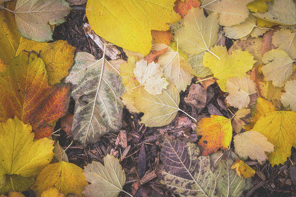 Photograph - Filmic Autumn Yellows by SR Green