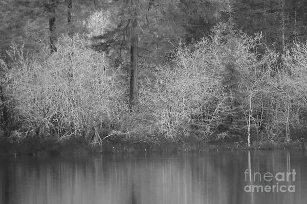 Photograph - Filter Series 200b by Jeni Gray