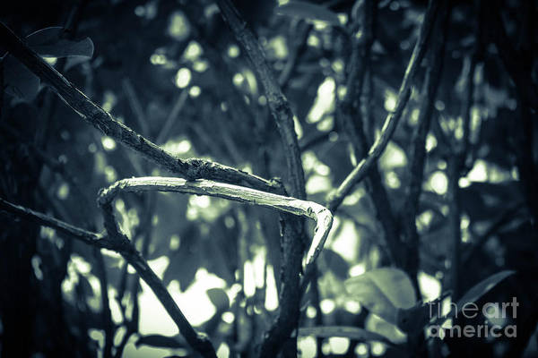 Photograph - Filtered Branches by Fei A