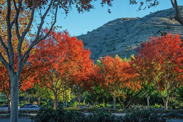Photograph - Finally Fall by Lynn Bauer
