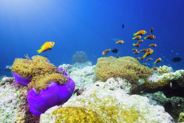 Underwater Photograph - Finding Nemo by Cinoby