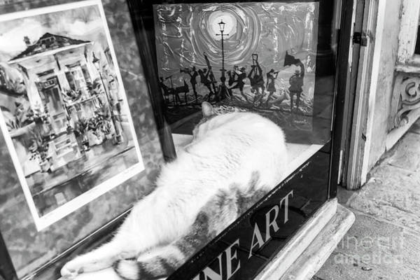 Wall Art - Photograph - Fine Art Cat New Orleans by John Rizzuto