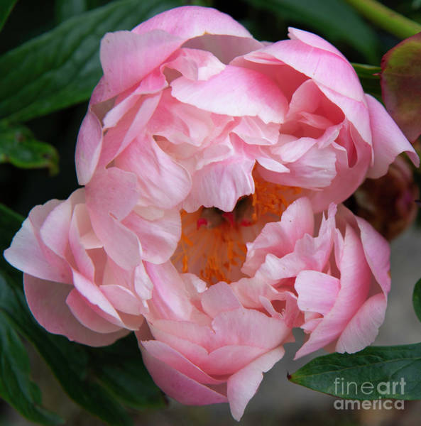 Photograph - Fine Art Nature Collection Photo 2 by Jenny Potter