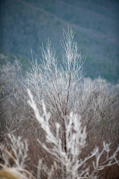 Photograph - Fingers Of Hoarfrost by Mark Duehmig