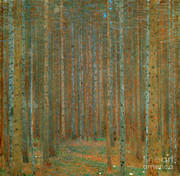 Wall Art - Painting - Fir Forest I, 1901 by Gustav Klimt