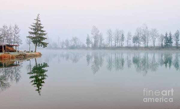 Wall Art - Photograph - Fir Trees Reflecting In Still Lake by Boris Stroujko