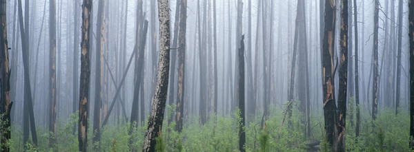 Wall Art - Photograph - Fire Damaged Forest And Understory by Art Wolfe