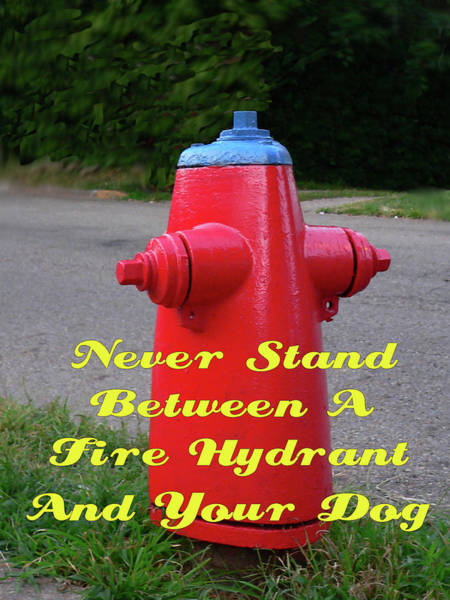Photograph - Fire Hydrant Advice by Kathy K McClellan