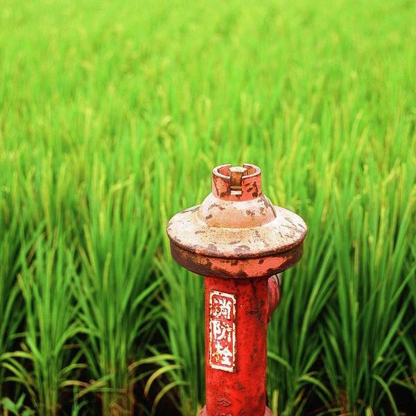 Wall Art - Photograph - Fire Hydrant By The Rice Paddy Field by Lin Yu Wei