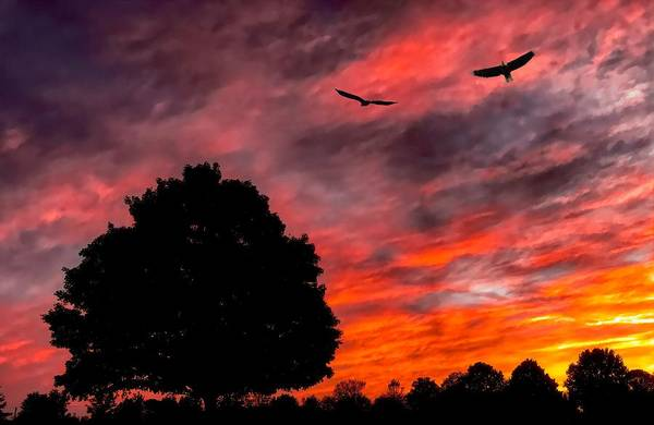 Photograph - Fire In The Sky by Jack Wilson