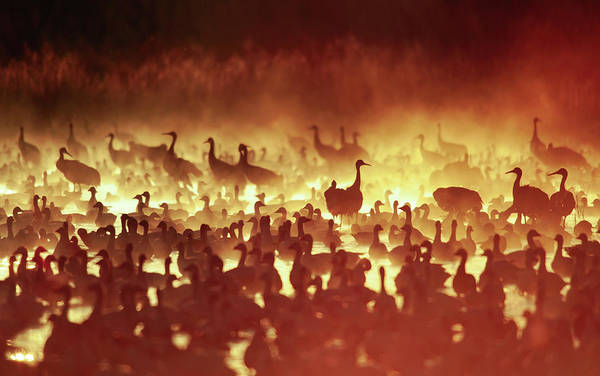 Photograph - Fire Mist Sans Flight by Scott Bourne
