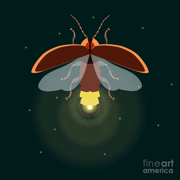 Fauna Digital Art - Firefly Design Template. Lightning Bug by Art4stock