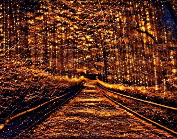 Mottled Mixed Media - Firefly Woodlands IIi by Marshall Thomas