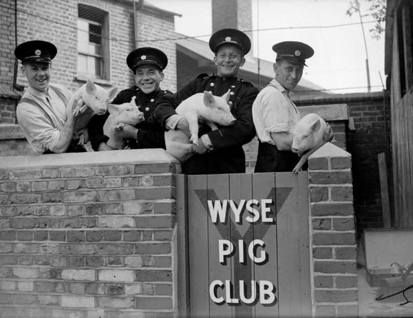 Pig Photograph - Firemens Pigs by Harry Todd