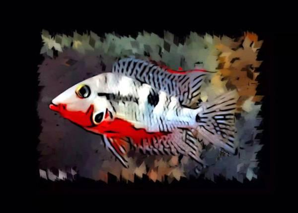 Belize Digital Art - Firemouth Cichlid Portrait  by Scott Wallace Digital Designs
