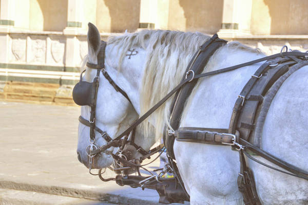 Photograph - Firenze Carriage Pair by JAMART Photography