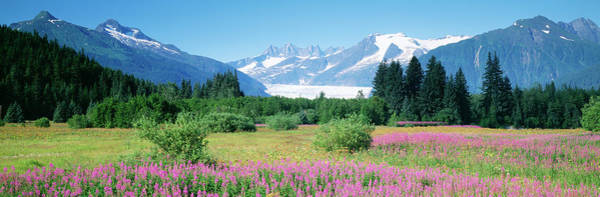 Wall Art - Photograph - Fireweed, Mendenhall Glacier, Juneau by Panoramic Images