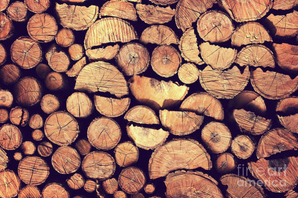 Wall Art - Photograph - Firewood Logs by Delphimages Photo Creations