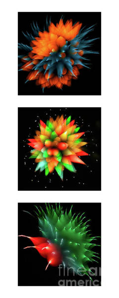 Photograph - Fireworks Abstract Collection by Doug Sturgess