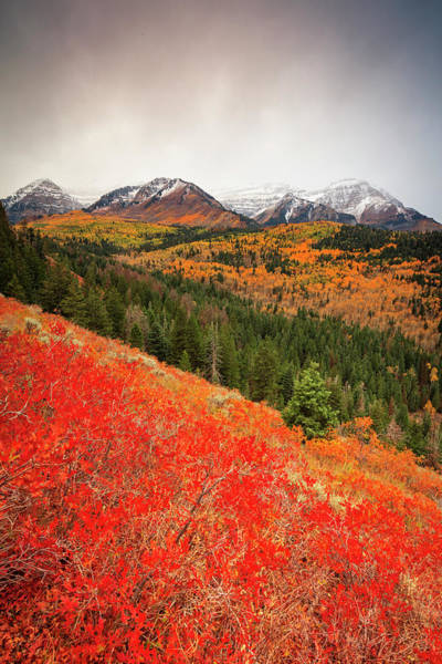 Photograph - First Fall Snow On Timpanogos by Johnny Adolphson