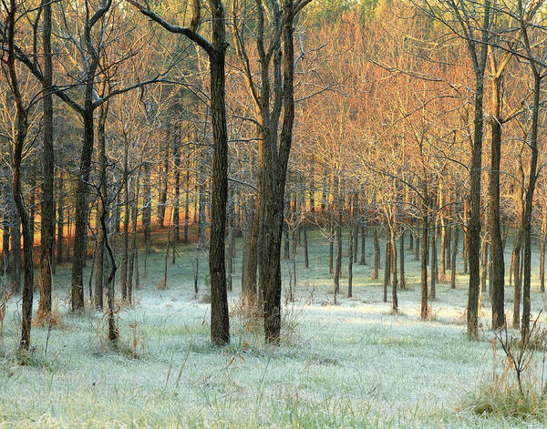 Ohio Photograph - First Frost by © Debbie Dicarlo Photography