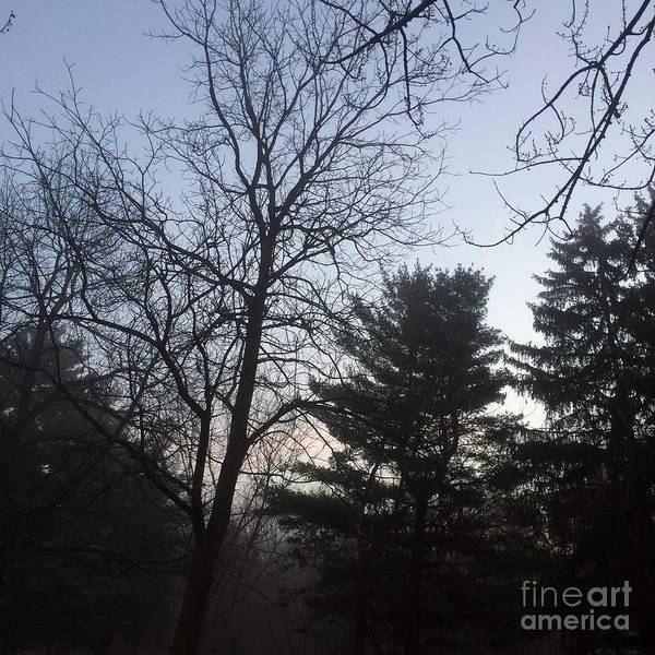 Photograph - First Light And Fog by Frank J Casella