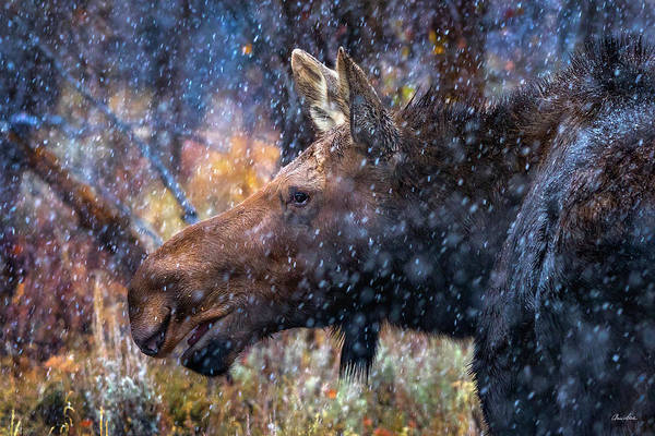 Photograph - First Snow by Chris Steele