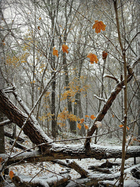 Photograph - First Snow Fall 3 by Cyryn Fyrcyd