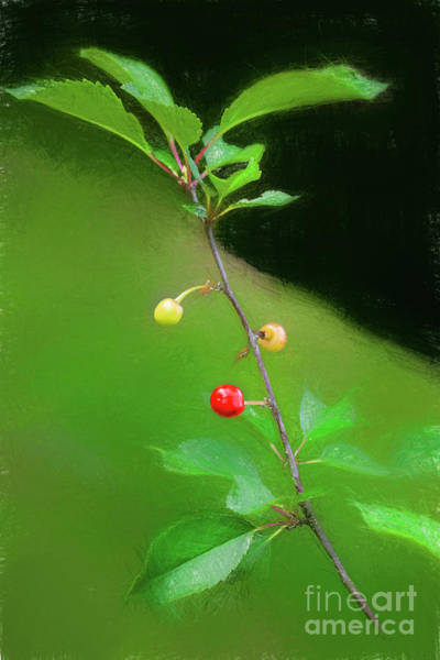 Wall Art - Digital Art - First Tart Cherries Of 2019 508vtti by Doug Berry