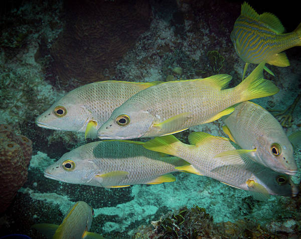 Photograph - Fish Chaos by Jean Noren