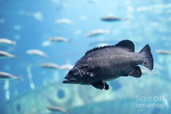 Wall Art - Photograph - Fish Close-up Underwater. by Michal Bednarek