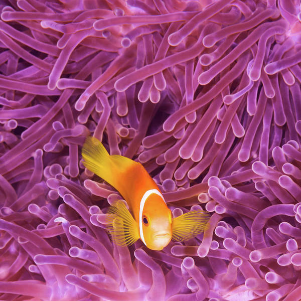 Underwater Photograph - Fish by Extreme-photographer